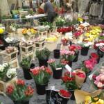 fiori mercatino isle sur la sorgue