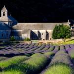 abbazia di senanque