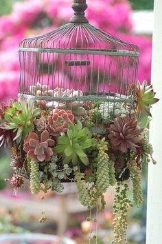 piante-grasse-gabbia