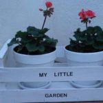 cassetta-frutta-piante