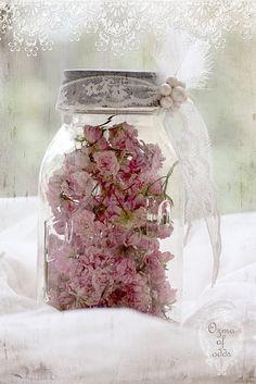 barattoli fiori secchi