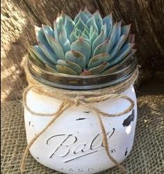 shabby chic cactus barattolo