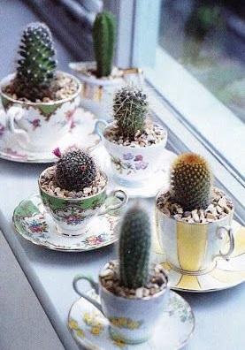 shabby chic tazzine cactus