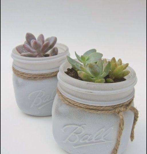 cactus barattoli