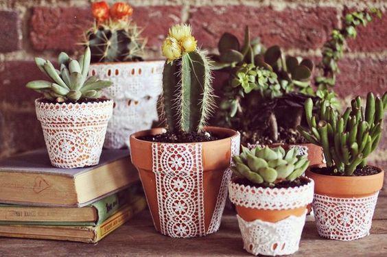 vasi cactus pizzo